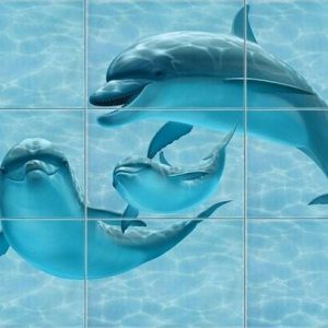 dolphins_plan
